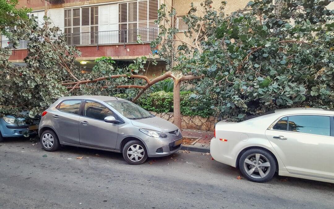 Tree Branch Damage Repair in Coppul